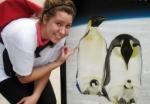 lil penguins?